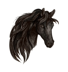 Black horse head watercolor portrait vector