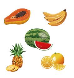 Fruit tropical fresh harvest vector