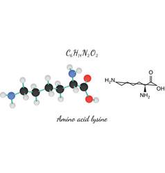 C6h14n2o2 amino acid lysine molecule vector