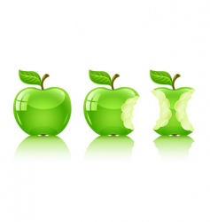Green nibbled apple with leaf vector