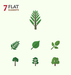 Flat icon nature set of acacia leaf evergreen vector