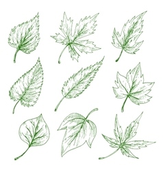 Green tree leaves sketches set vector image vector image