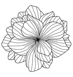Begonia flower drawing on white background vector