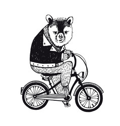Bear on the bicycle vintage on white vector