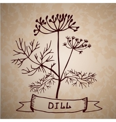 Dill herb with leaf and flower isolated vector