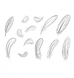 feather vector image