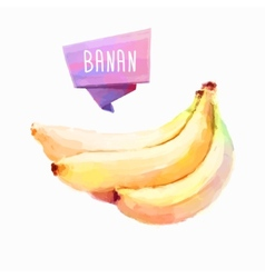 Banana hand drawn watercolor on a white vector