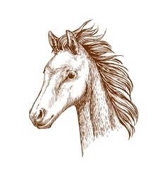Brown horse pencil sketch portrait vector image vector image