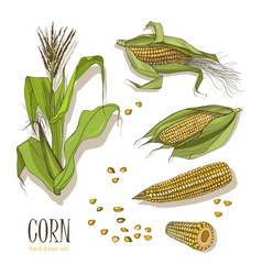 Set of corn plant colorful hand drawn collection vector