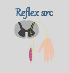 Human organ icon in flat style reflex arc vector