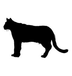 Pictogram cougar or mountain lion portrait animal vector