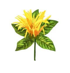 Yellow tropical plant mexican honeysuckle orange vector
