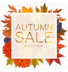 Autumn sale discount banner on the transperant vector