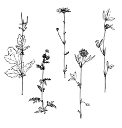 Set of ink drawing herbs vector