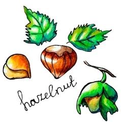 Hazelnut vector