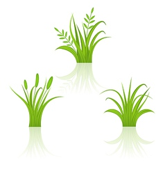 Set green grass isolated on white background vector image vector image