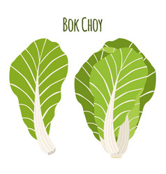 bok choy chinese cabbage in flat style natural vector image vector image