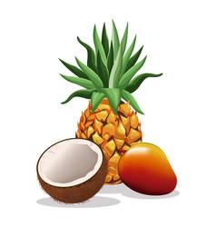 Pineapple mango and coconut fruit fresh harvest vector