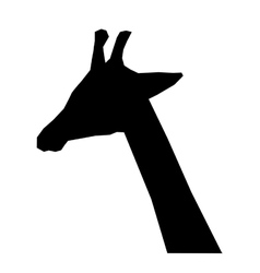 giraffe african animal vector image