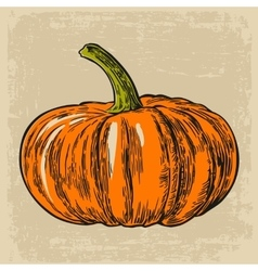 Pumpkin engraving  isolated vector