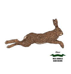 Forest animal hare or rabbit hand drawn colored vector