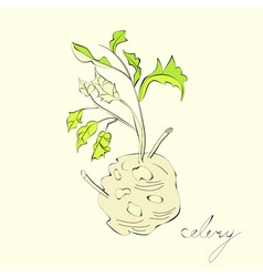 illustration with celery with root leaf vector image vector image