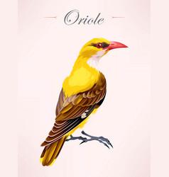 Oriole bird vector