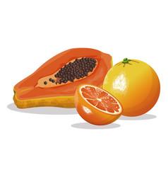 Papaya orange fruit fresh harvest vector