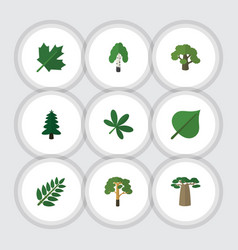Flat icon nature set of maple timber acacia leaf vector
