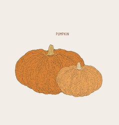 Pumpkins paint hand drawn picture in cartoon vector