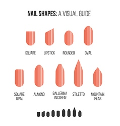 Nail shapes visual guide vector
