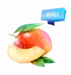 Mango hand drawn watercolor on a white background vector