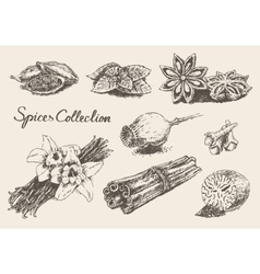 Set hand drawn spices and herb collection vector