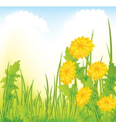 Dandelion meadow vector image