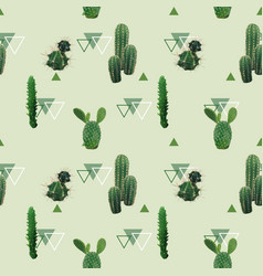 cactus plant seamless pattern exotic tropical vector image