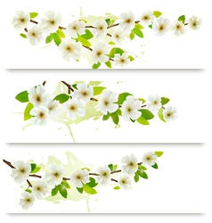 Three spring banners with blossoming tree brunch vector image vector image