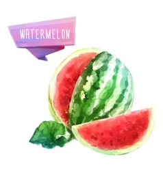 Watermelon hand drawn watercolor on a white vector image vector image