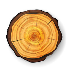 Cross section tree wooden stump trunk vector