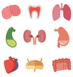 human internal organs on white background vector image vector image