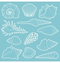 White sea shells icon set vector