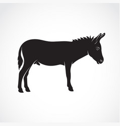 a donkey on white background wild animals vector image