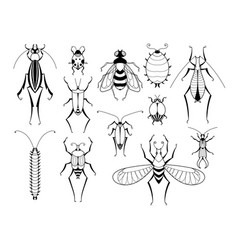 different insects with patterns on wings vector image vector image