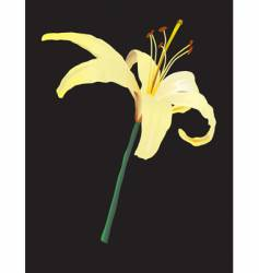 yellow lily vector image vector image