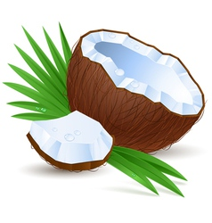Half a coconut vector