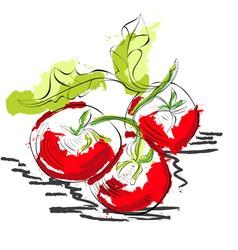 tomato vector image vector image