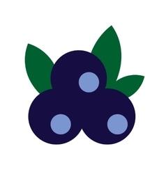 Blueberries flat icon vector