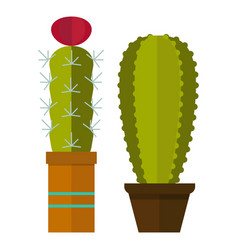 cactus nature desert flower green mexican vector image