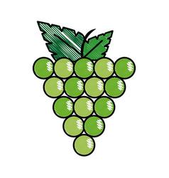 Grape fruit food vector