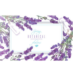 lavender flowers banner vector image vector image