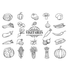 hand drawn vegetables icons set decorative vector image